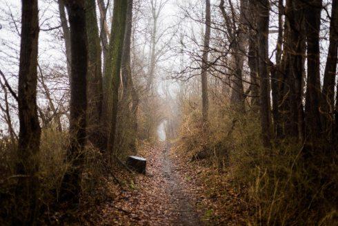 dawn-environment-fall-891412.jpg